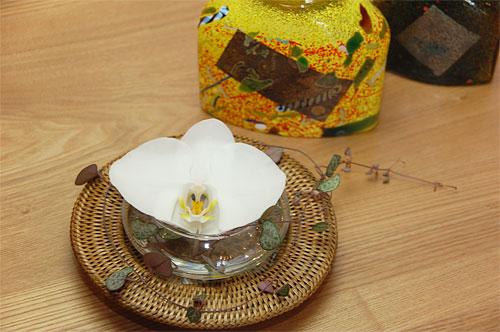胡蝶蘭とアンダープレートミニ