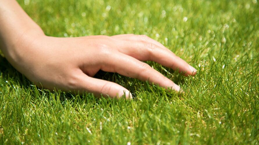 芝を触る手