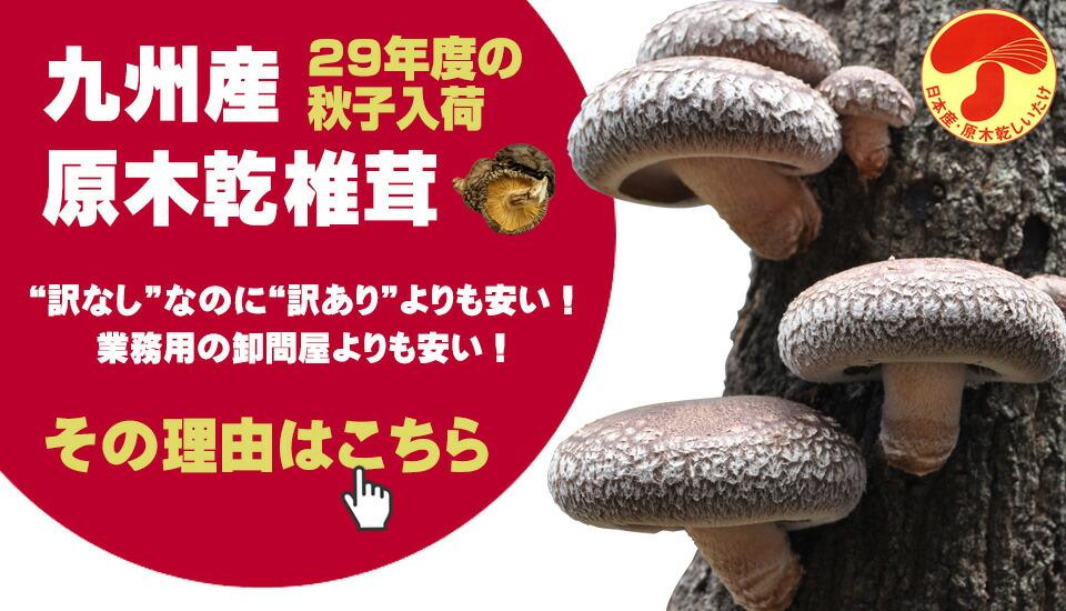 九州産原木乾椎茸_29秋子