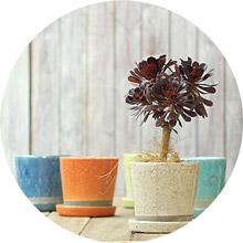 color植木鉢