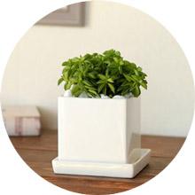 シンプル植木鉢