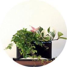 個性的な植木鉢