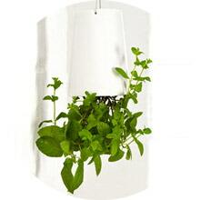 ハンギング植木鉢
