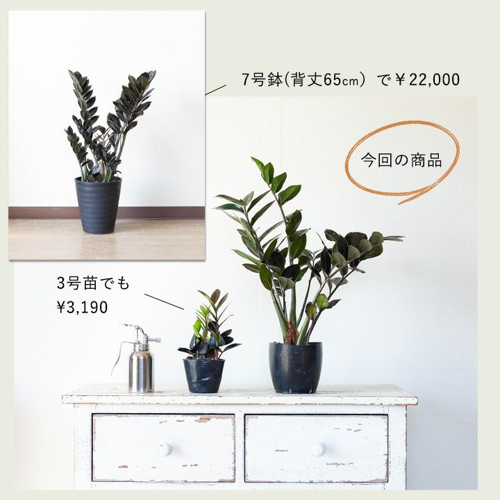 サイズと価格の比較