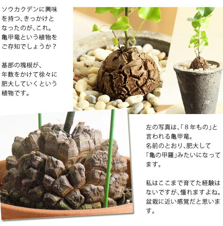 塊根植物の説明