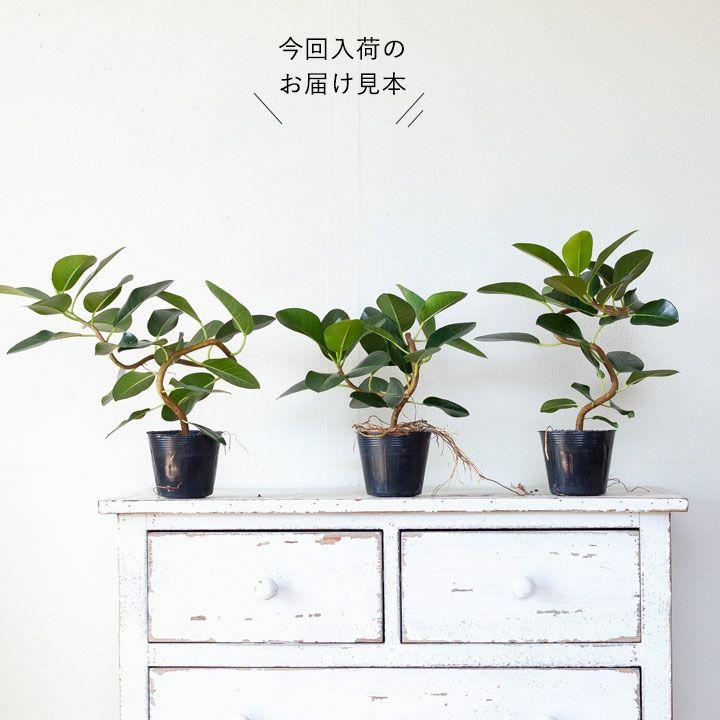 樹形の説明