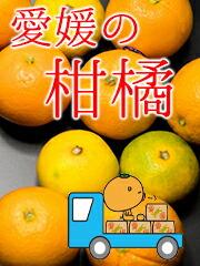 愛媛の柑橘