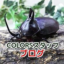 昆虫ショップCOLORS楽天市場店ブログ