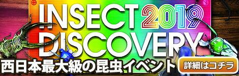 イベントバナー1・西日本最大級の昆虫イベントINSECT DISCOVERY2019詳細はこちら