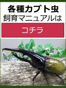 カブトムシ飼育マニュアル