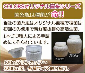 COLORSオリジナル菌糸