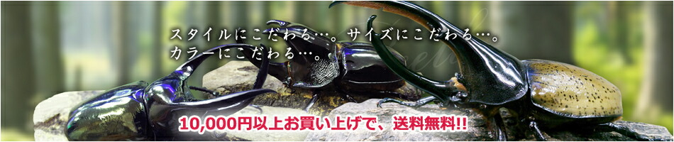 カブトムシ・クワガタムシ・スタイルカラーサイズにこだわる・10000円以上お買い上げ送料無料