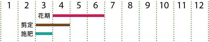 開花カレンダー  シマトネリコ