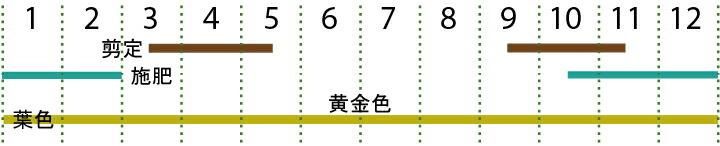 開花カレンダー(ゴールドライダー)