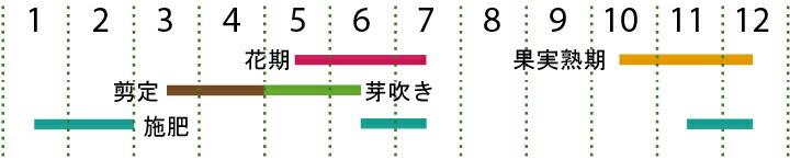 開花カレンダー(オリーブ)