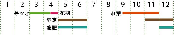 開花カレンダー(イロハモミジ)
