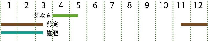 開花カレンダー(ケヤキ)
