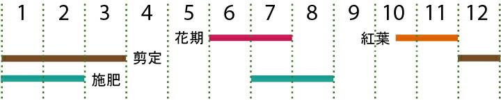 開花カレンダー(ヒメシャラ)