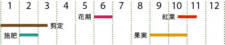 開花カレンダー(ヤマボウシ)