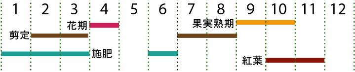 開花カレンダー(カナクギノキ)