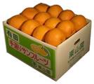 田の浦オレンジ