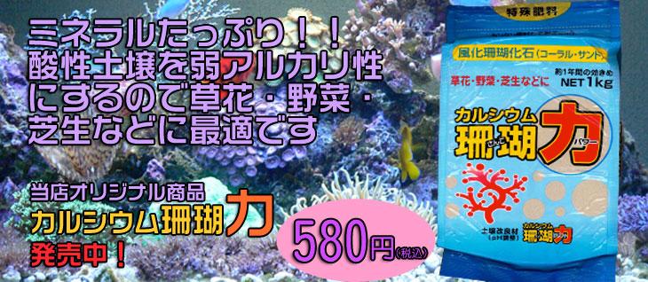 カルシウム珊瑚パワー