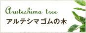アルテシマゴムの木
