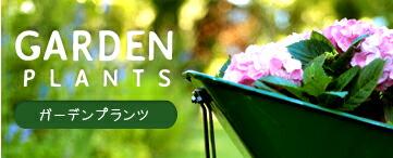 ガーデンプランツ