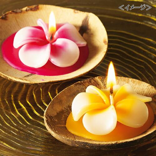 ハワイ プルメリアキャンドル6個セット