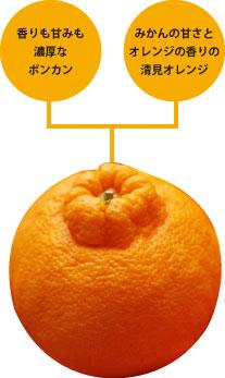 不知火は清見オレンジとポンカンの交配種