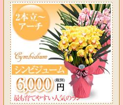 シンビジューム6000円