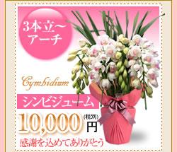 シンビジューム10000円