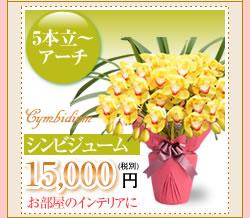 シンビジューム15000円