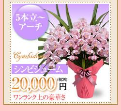 シンビジューム20000円