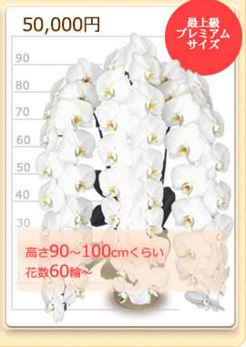 50000円の胡蝶蘭