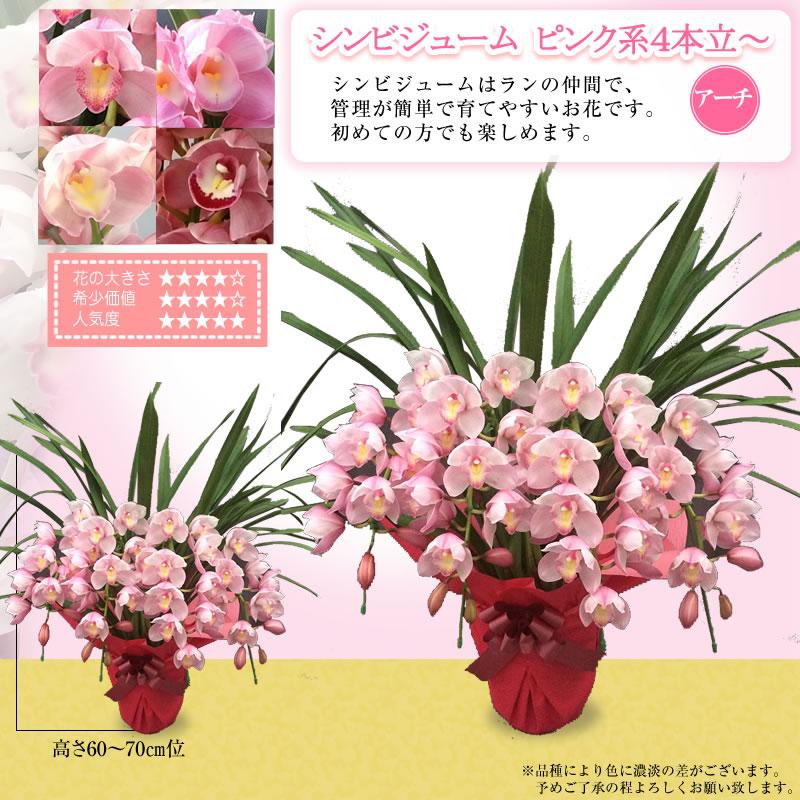 ピンク色系5本立~