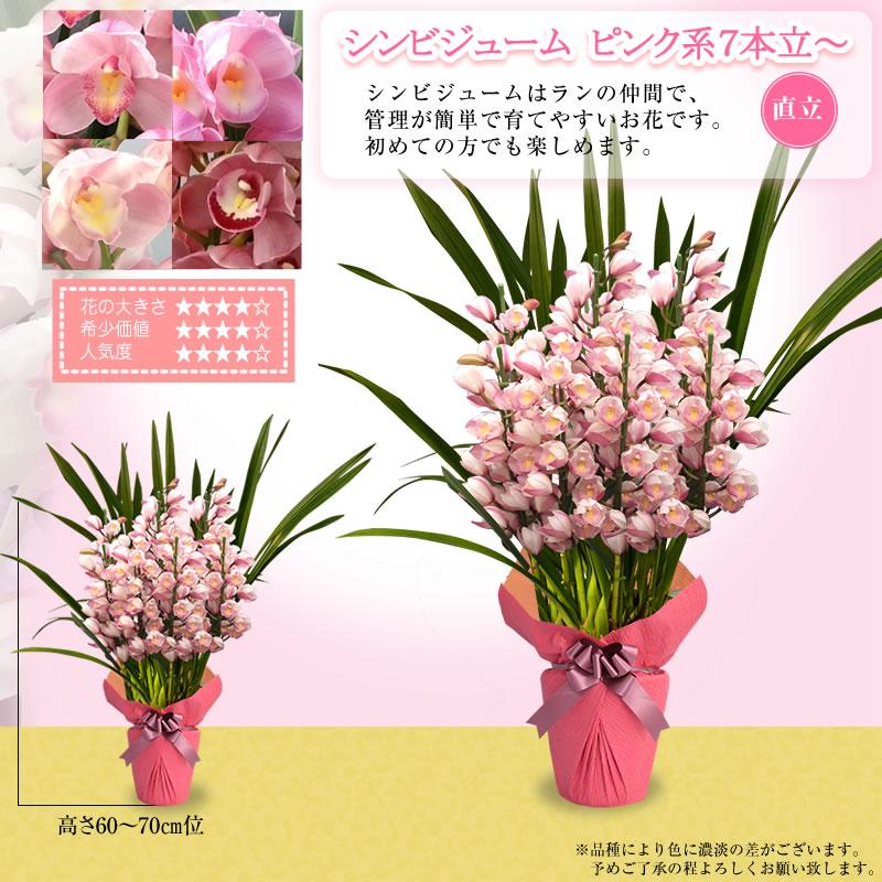 ピンク色系7本立~