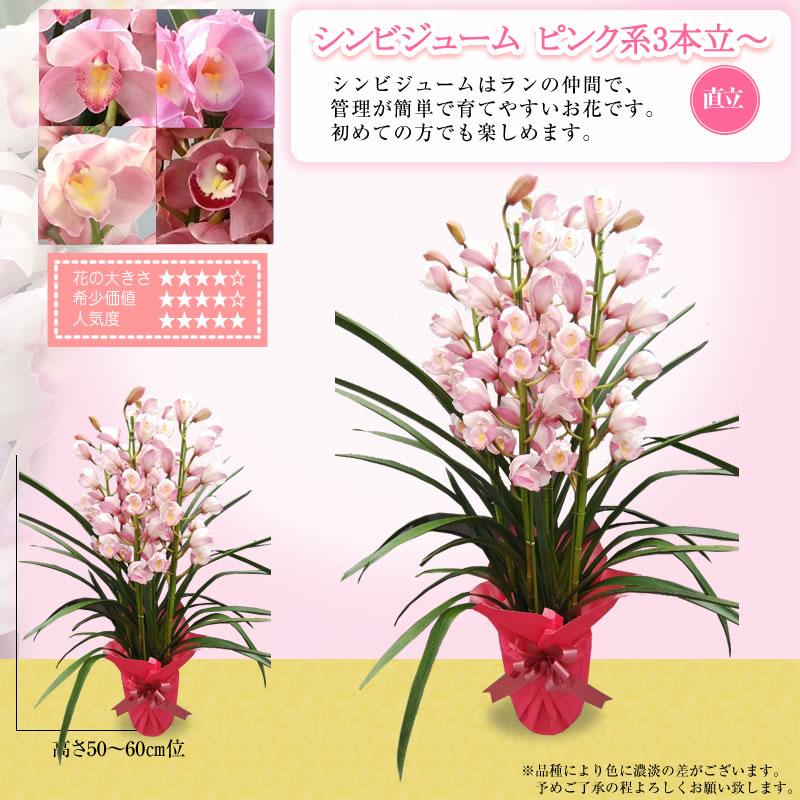 ピンク色系3本立~