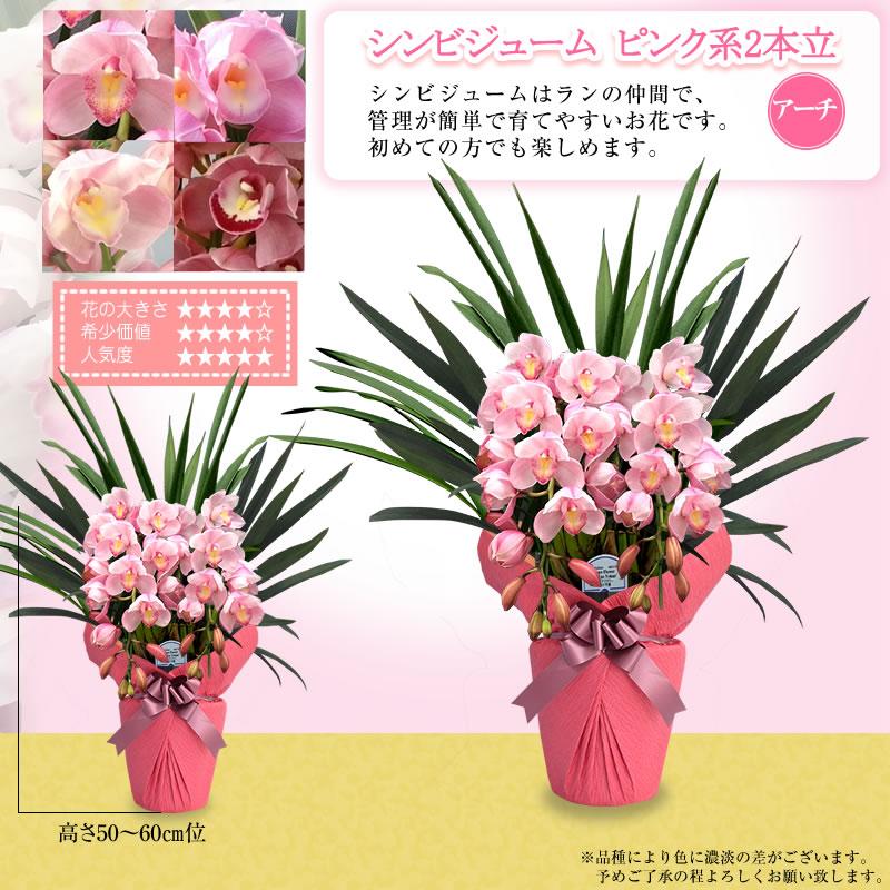 ピンク色系2本立~
