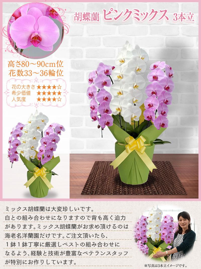 白×ピンク3本立