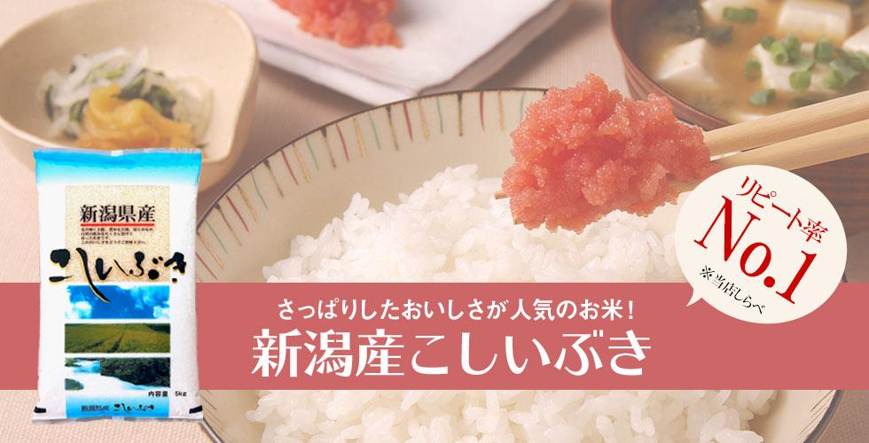 米 お米 10kg こしいぶき 新潟産 令和2年産