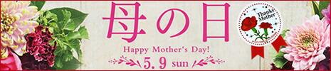 日本酒 あまざけ 母の日