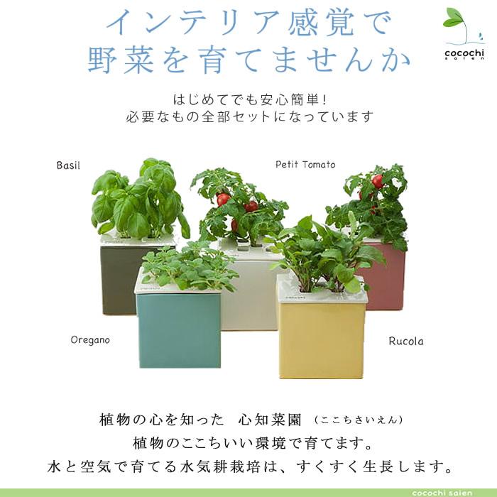 水耕栽培キット・心知菜園(cocochi saien)