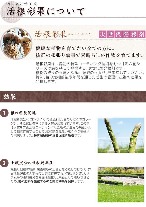 活根彩果(カッコンサイカ)
