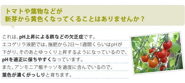 エコゲリラ液肥A・B液