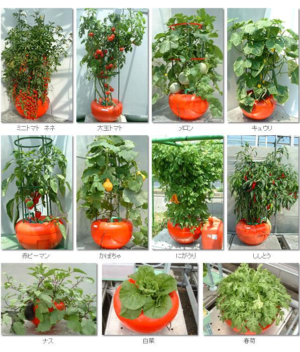 ホームハイポニカ601栽培例