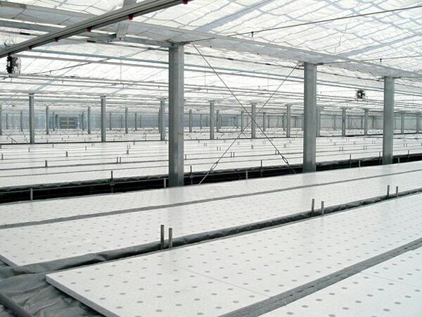 水耕栽培プラント事例