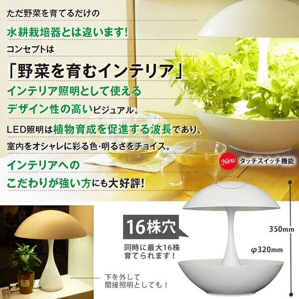 Akarina01 (アカリーナ) OMA01