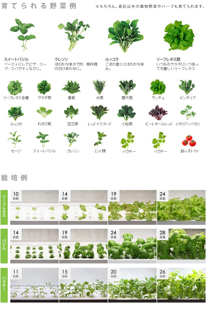 水耕栽培器Green Farm Cube(グリーンファームキューブ)