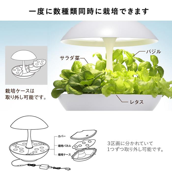 LED水耕栽培 アカリーナ
